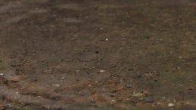 Goccia di pioggia su terra video d archivio