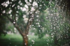 Goccia di pioggia sul fondo della natura Fotografia Stock