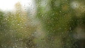 Goccia di pioggia sul vetro di finestra con il fondo confuso dell'albero stock footage