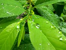Goccia di pioggia sulla foglia Fotografia Stock