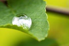 Goccia di pioggia sulla foglia verde Immagini Stock