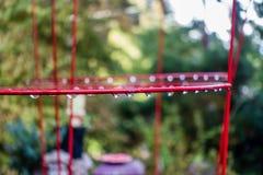 Goccia di pioggia sulla gabbia rossa 3 della pianta Fotografie Stock