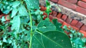 Goccia di pioggia sulle foglie Immagini Stock