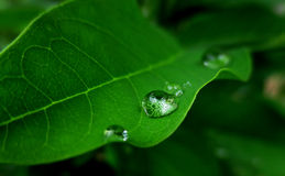 Goccia di pioggia in una foglia Immagini Stock