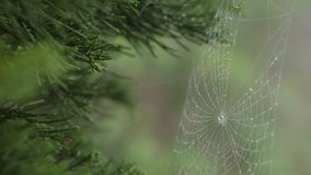 Goccia di rugiada del primo piano sul web del ` s del ragno Fotografia Stock Libera da Diritti