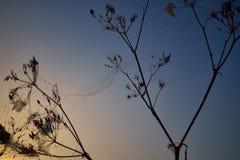 Goccia di rugiada durante l'alba colorata calma fotografia stock