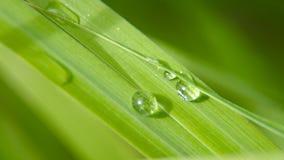 Goccia di rugiada sull'erba Immagini Stock Libere da Diritti