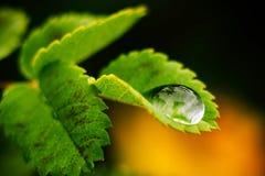 Goccia a macroistruzione di acqua Fotografia Stock Libera da Diritti