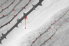 Goccia rossa di colore delle spine Fotografie Stock Libere da Diritti