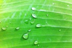 Goccia sulle foglie Fotografia Stock