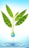 Goccia verde dell'acqua e del foglio Fotografia Stock Libera da Diritti
