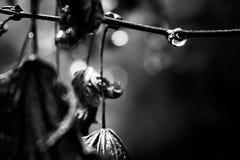 Gocciolina della foglia Fotografie Stock