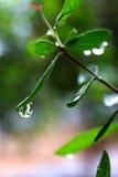 Gocciolina della pioggia Immagine Stock