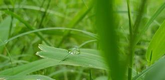 gocciolina di acqua su erba fotografia stock libera da diritti