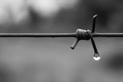 Gocciolina di Barbwire Fotografia Stock Libera da Diritti