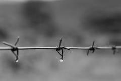 Gocciolina di Barbwire Fotografie Stock Libere da Diritti