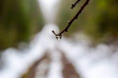 Gocciolina solitaria Fotografia Stock