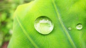 Gocciolina sulla pianta verde immagine stock
