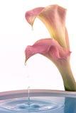 Goccioline del fiore immagini stock