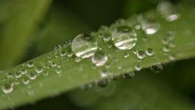 Goccioline dell'acqua piovana su una singola lama di erba fotografia stock