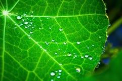 Goccioline della pioggia fotografia stock
