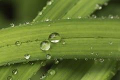 Goccioline della pioggia Fotografie Stock