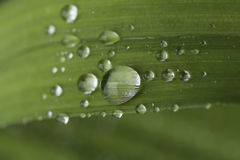 Goccioline della pioggia Immagini Stock Libere da Diritti