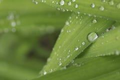 Goccioline della pioggia Immagine Stock