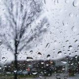 Goccioline della pioggia e dell'albero sulla finestra di vetro trasparente fotografia stock libera da diritti