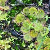 Goccioline della rugiada su flora Fotografia Stock