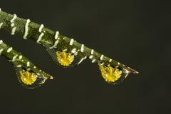 Goccioline di acqua con i fiori Fotografia Stock Libera da Diritti