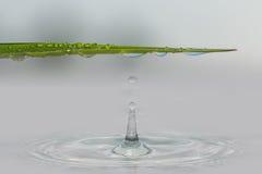 Goccioline di acqua dalle foglie di erba Fotografia Stock Libera da Diritti