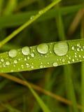 Goccioline di acqua del foglio Fotografia Stock