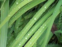 Goccioline di acqua dell'erba Fotografie Stock