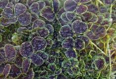 Goccioline di acqua della foglia Fotografie Stock