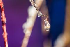 Goccioline di acqua glassate su un ramoscello fotografia stock libera da diritti