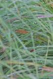 Goccioline di acqua su erba Fotografia Stock