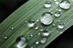 Goccioline di acqua su erba fotografie stock libere da diritti