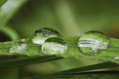 Goccioline di acqua su erba Immagini Stock