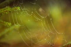 Goccioline di acqua su una ragnatela in natura Fotografie Stock Libere da Diritti
