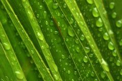 Goccioline di acqua su verde Fotografia Stock Libera da Diritti
