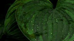 Goccioline di acqua sui fogli fotografie stock