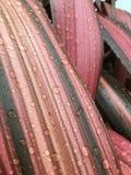Goccioline di acqua sui fogli Fotografia Stock