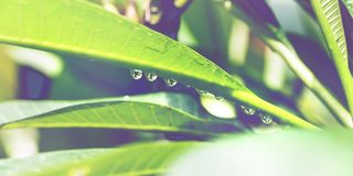 Goccioline di acqua sui fogli fotografia stock libera da diritti
