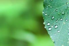 Goccioline di acqua sul fogliame verde su fondo vago immagini stock libere da diritti