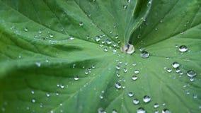 Goccioline di acqua sul foglio Fotografie Stock Libere da Diritti