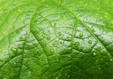 goccioline di acqua sul foglio verde Fotografie Stock