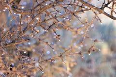 Goccioline di acqua sul ramo di ulivo confuso immagini stock