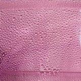 Goccioline di acqua sul rosa del secchio Fotografia Stock Libera da Diritti