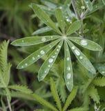 Goccioline di acqua sulla pianta Immagini Stock